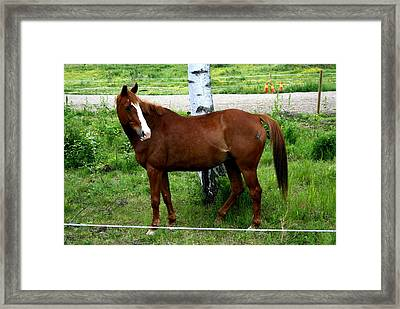 Horse In The Country Side Framed Print