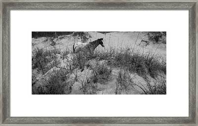 Horse In The Dunes Framed Print