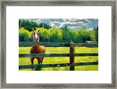 Framed Print featuring the painting Horse In The Field by Jeff Kolker