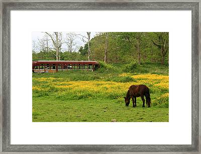 Horse In The Meadow Near Weetamoo Framed Print