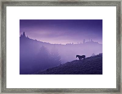 Horse In The Mist Framed Print by Yuri Santin