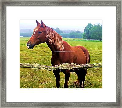 Horse In The Pasture Framed Print