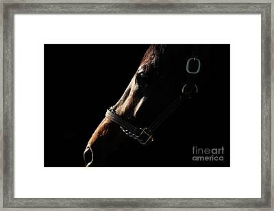 Horse In The Shadows Framed Print