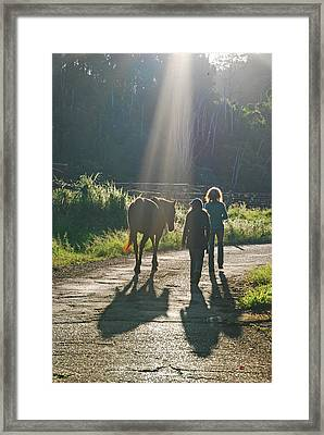Horse In The Spotlight Framed Print