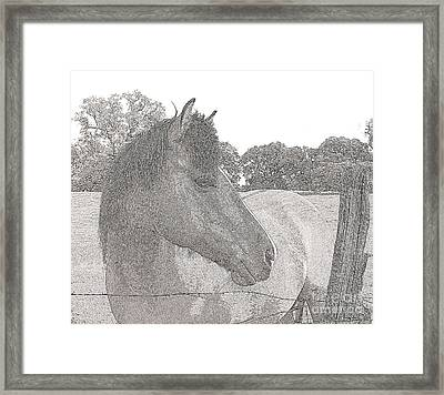 Framed Print featuring the photograph Horse by Irina Hays