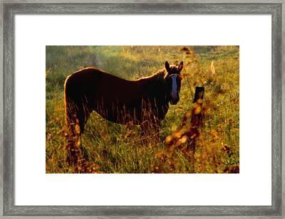 Horse Framed Print by Jim Vance