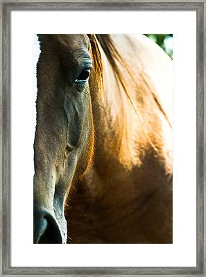 Horse Framed Print by Joel Loftus