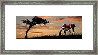 Horse Mare And A Foal Grazing By Tree Framed Print