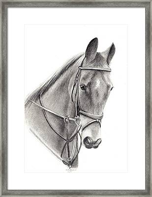 Horse Framed Print by Mary Mayes