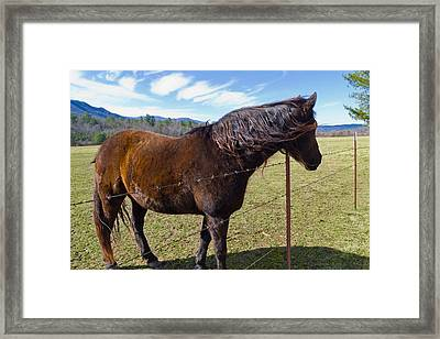 Horse Framed Print by Melinda Fawver
