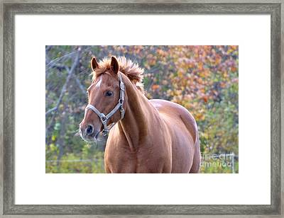 Framed Print featuring the photograph Horse Muscle by Glenn Gordon