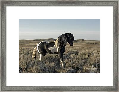 Horse - New Day Framed Print by Wildlife Fine Art
