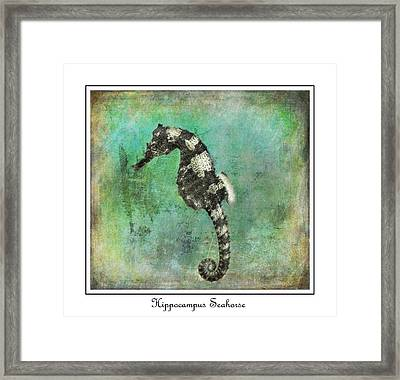 Horse Of The Sea Framed Print by Barbara Chichester