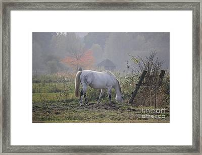 Horse On A Peaceful Day Framed Print