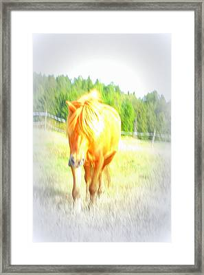 A Totally Relaxed Horse On His Summer Holiday Framed Print