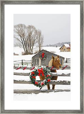 Horse On Soward Ranch Decorated For The Framed Print