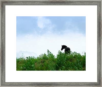 Framed Print featuring the photograph Horse On The Hill by Joan Davis