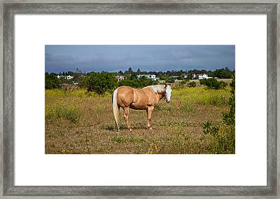 Horse Out To Pasture Framed Print by Joe Fernandez