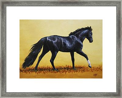 Horse Painting - Black Beauty Framed Print