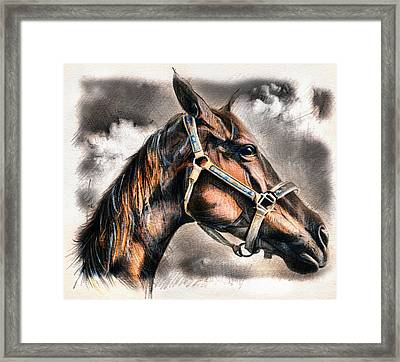 Horse - Pencil Drawing Framed Print by Daliana Pacuraru