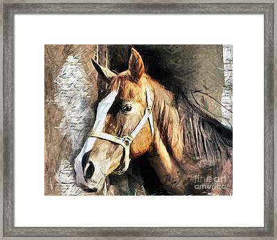 Horse Portrait - Drawing Framed Print