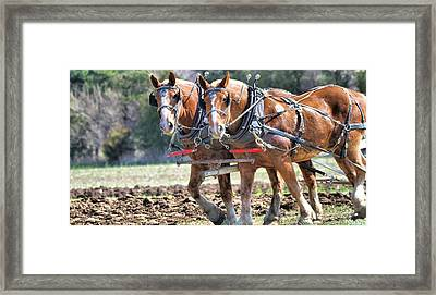 Horse Pose Framed Print by Dan Sproul