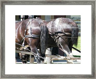 Framed Print featuring the photograph Horse Power by Ann E Robson