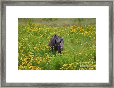 Horse Power Flower Power Framed Print by Bob Hislop