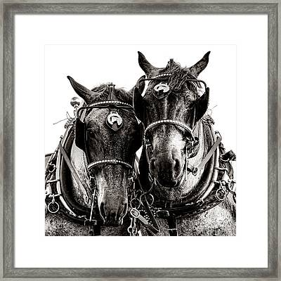 Horse Power Framed Print by Olivier Le Queinec