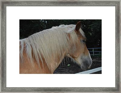 Horse Profile Framed Print by Cim Paddock