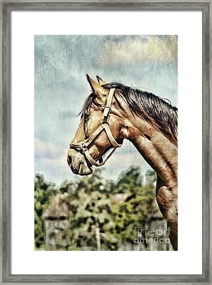 Horse Profile Framed Print