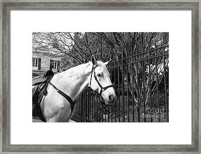 Horse Profile Mono Framed Print by John Rizzuto