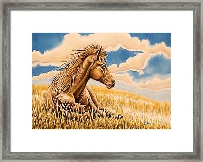 Horse Resting Framed Print by Tish Wynne
