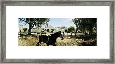 Horse Running In An Paddock, Gerena Framed Print