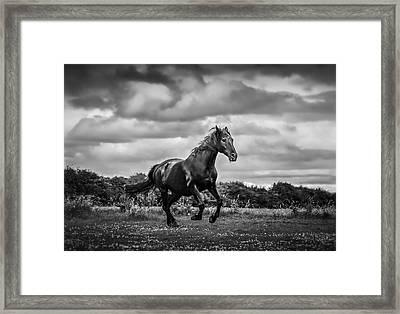 Horse Running In Field Framed Print by Rory Turnbull / Eyeem
