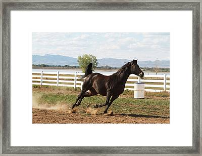 Horse Running In Pasture Framed Print by Piperanne Worcester