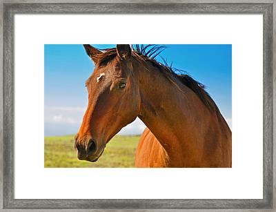 Horse Framed Print by Sabine Edrissi
