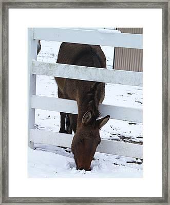 Horse Sense Framed Print