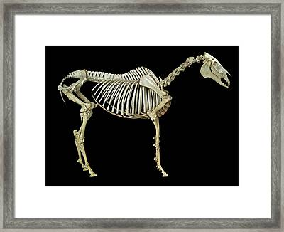 Horse Skeleton Framed Print by Natural History Museum, London