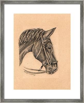 Horse Sketch Framed Print