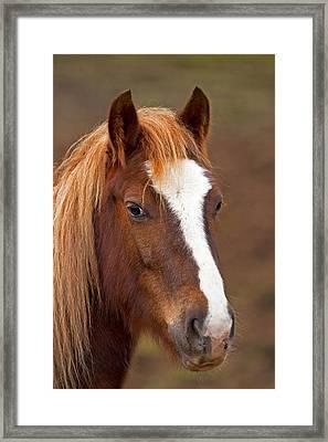 Horse Stare Framed Print by Paul Scoullar