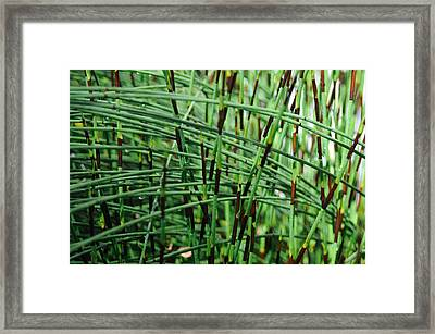 Framed Print featuring the photograph Horse Tail Zen Garden by Haleh Mahbod