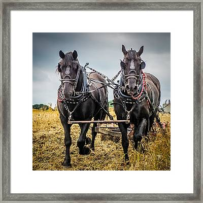 Horse Team Framed Print by Paul Freidlund