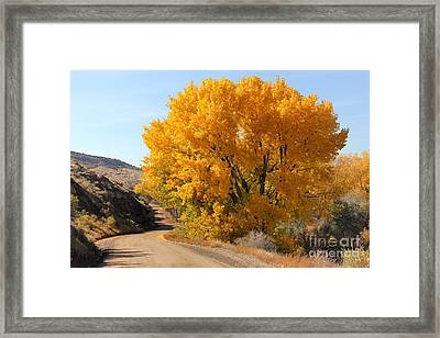 Horse Thief Canyon Gold Framed Print
