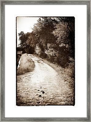 Horse Trail Framed Print by John Rizzuto