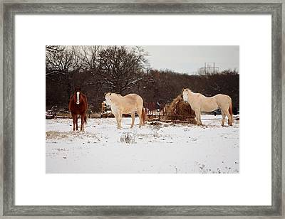 Horse Trio In The Snow Framed Print by Toni Hopper