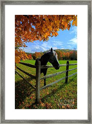 Horse Under Tree By Fence Framed Print by Dan Friend