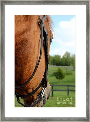 Horse View Framed Print