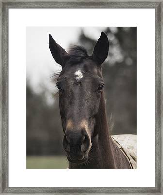 Horse With Gentle Eyes Framed Print