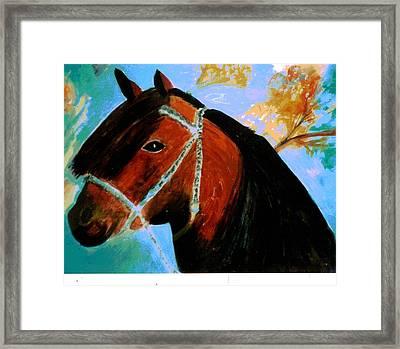 Horse With Long Forelocks Framed Print by Anne-Elizabeth Whiteway